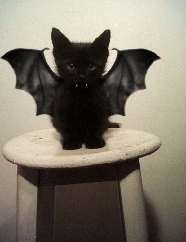 こうもりになった黒猫